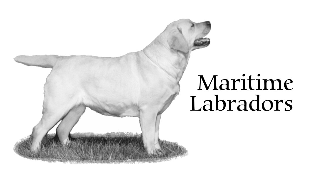Maritime Labradors